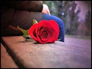 imagen de amor rosa roja