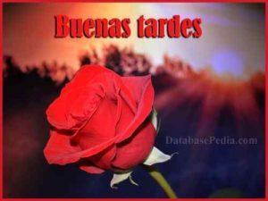 50 Imagenes De Buenas Tardes Bonitas Amiga Mi Amor Foto