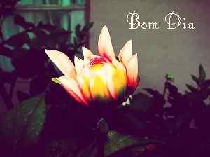 download de imagem de bom dia com flor