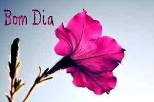 foto linda flor com bom dia legenda