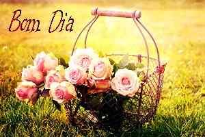 mais recente bom dia flores imagem HD