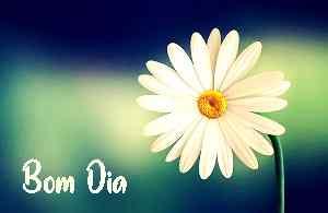top bom dia flor branca baixar imagem HD