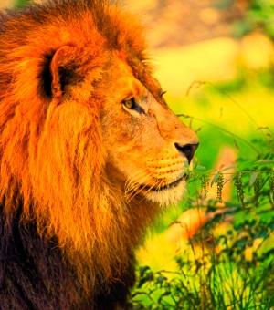 mejor imagen de león para la foto de perfil de Whatsapp