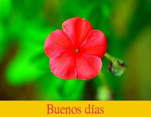 mejores flores imags con buenos días descargar