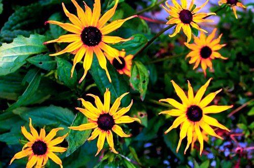 dulces flores tumblr imágenes descargar para fb