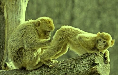 mejor foto divertida mono
